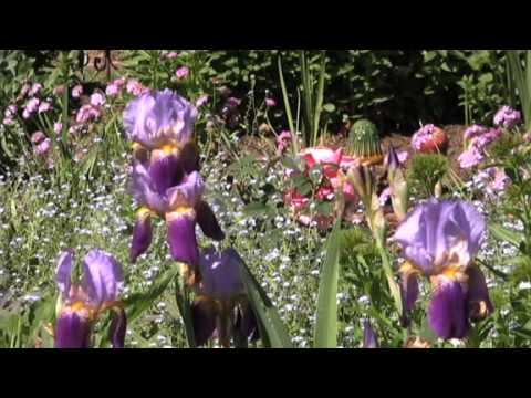 Green Thumbs: Cheryl Sullivan Reed's yard