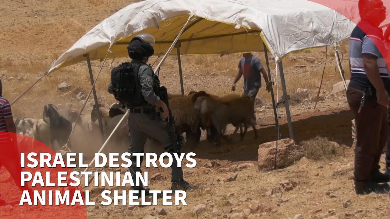 Israeli forces destroy Palestinian animal shelter, arrest ...
