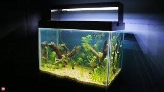 No Filter No CO2 No Ferts Planted Nano Tanks