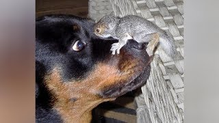 Top FUNNY SQUIRREL VIDEOS - PREPARE YOURSELF to LAUGH ULTRA HARD!