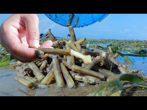 Yummy Razor Clam Cooking – Catching And Cooking Razor Clam At Ocean Shore – Cooking With Sros