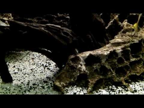 April 2013 Aquarium Updates