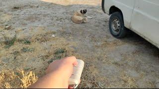 Köpek Savar ( İşe Yarıyor mu? )