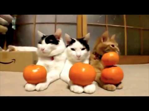 Тесты на психику кто засмеется тот псих про котов