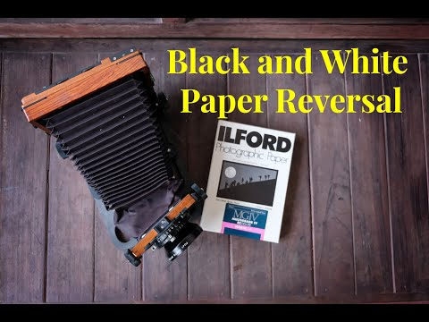 film-photography-black-and-white-paper-reversal