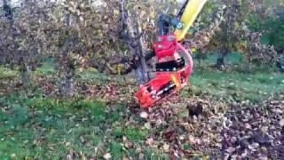 Obstbäume roden mit Woodcracker am Bagger von Rehder Landmaschinen GmbH