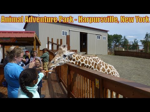 Download Youtube: ANIMAL ADVENTURE PARK  FEATURING APRIL THE GIRAFFE-  Harpursville, New York