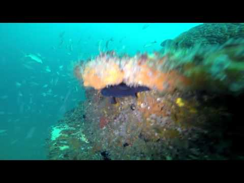 10-9-16 Red Sea Tugboat, Panama City Beach, FL