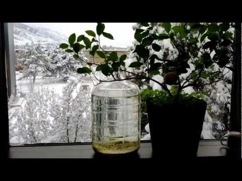 Great Salt Lake in a bottle 5