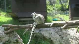 Israel.   Zoo in Haifa:  flamingo, parrots, lemurs(Зоопарк в Хайфе: фламинго, попугаи, сурикаты и лемуры. Одной из достопримечательностей Хайфы является образ..., 2013-12-20T07:12:16.000Z)