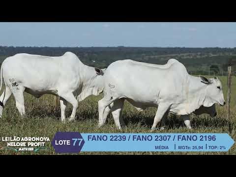 LOTE 77 FANO 2239 X 2307 X 2196