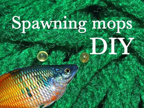 DIY Making Mops For Breeding Killifish, Rainbowfish And Other Species