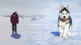 Путник - детская песня - Наталия Лансере / Клип -  Собака спасает человека, человек спасает собаку