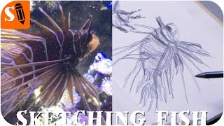Sketching Sharks, Jellyfish, Stingrays in a Sea Life Aquarium