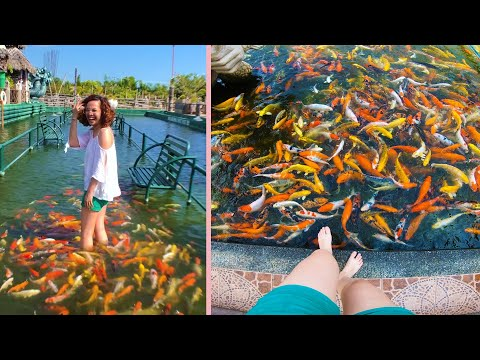 Underwater Bridge In The Philippines Lets You Walk With Fish