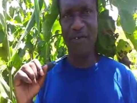 Documentaire L'OR VERT DU DÉSERT (jatropha curcas) partie 1