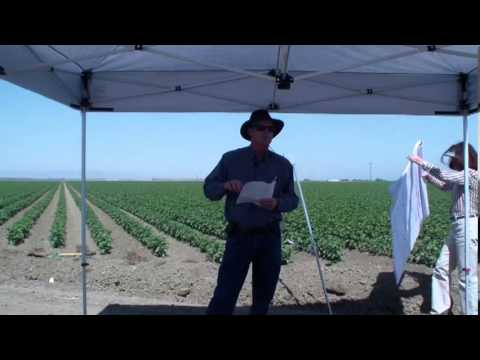 Herbicide Resistance in your Cotton Fields? - Steve Wright