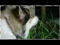 犬動画 道草を食うもこみち