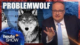 160 Wölfe in Deutschland – und alle flippen aus