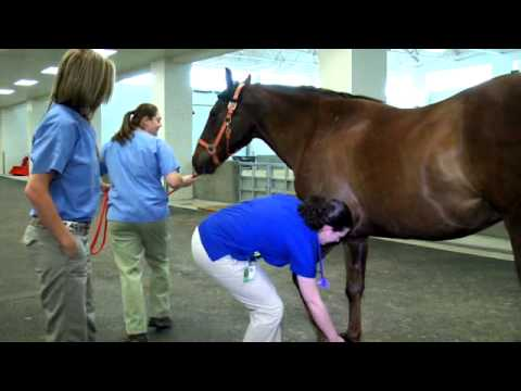 Equine Hospital Tour at the University of Tennessee Veterinary Medical Center