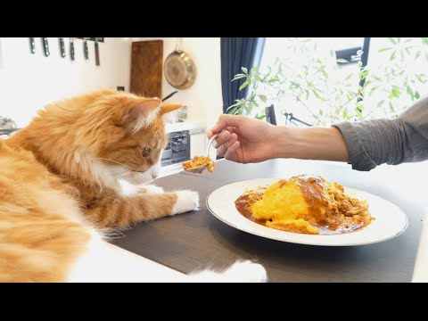 Check out this guy's cat while he masterfully cooks a Japanese omelette