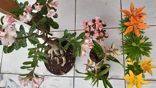 2 Ingredientes Caseiros Que vão Ajudar muito na Floração de Suas Plantas