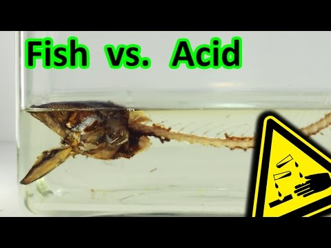 Smoked Fish vs. Stomach Acid decomposition | AcidTube-Chemical reactions