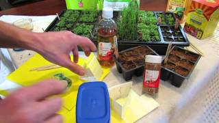 MFG 2016: How to Make Sticky Traps & Using Vinegar to Stop Garden Pests: Seed Starting Help!