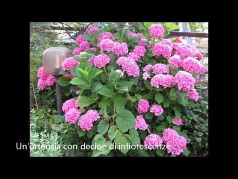 Piante e fiori del giardino youtube for Giardino fiori