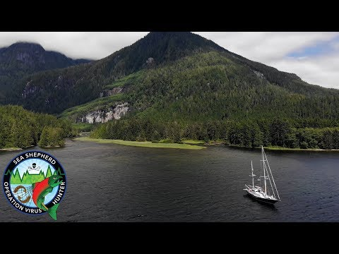 Operation Virus Hunter - Pink Salmon Ahta River