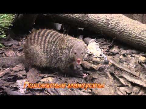 Тропические хищники Ленинградского зоопарка / Tropical predators of the Leningrad zoo