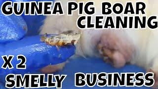 Two Guinea Pig Boy Cleaning Smelly Business at LAGPR