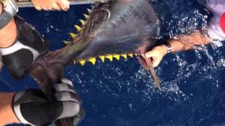 Pêche au thon réanimation