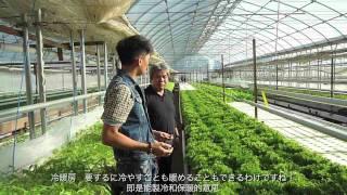 日本最新發明:含乳酸菌無農薬水耕菜 thumbnail