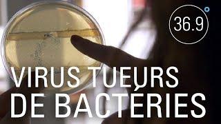 Phagothérapie: les virus tueurs de bactéries - 36.9°