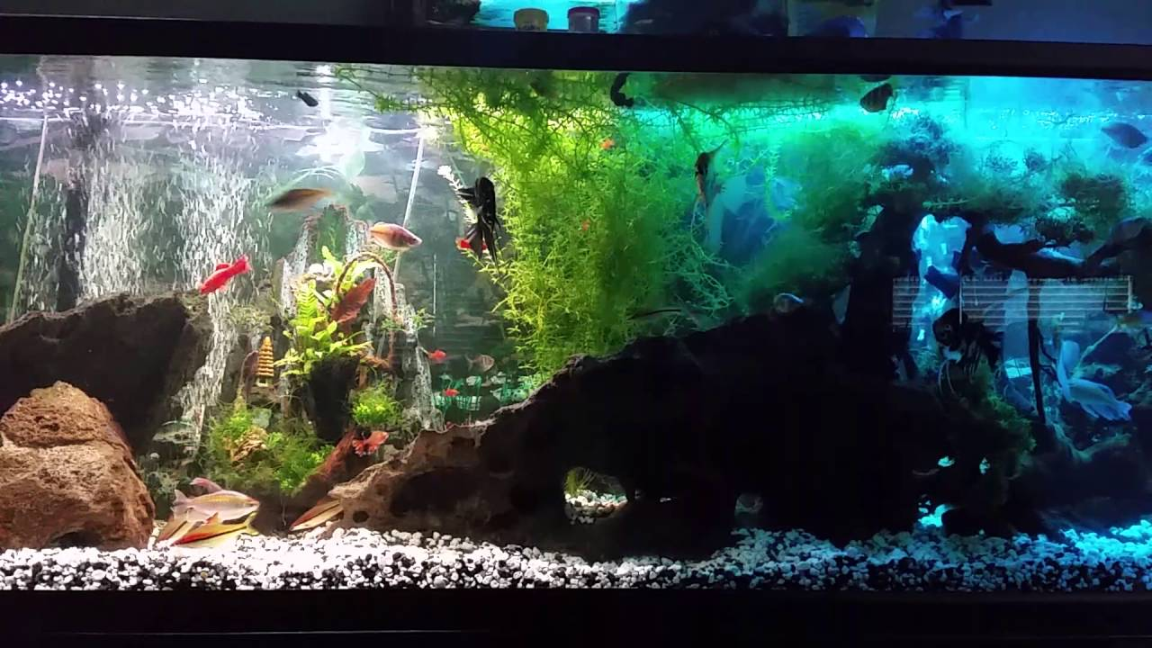 125 Gallon Ugly Ass Fish Tank Youtube
