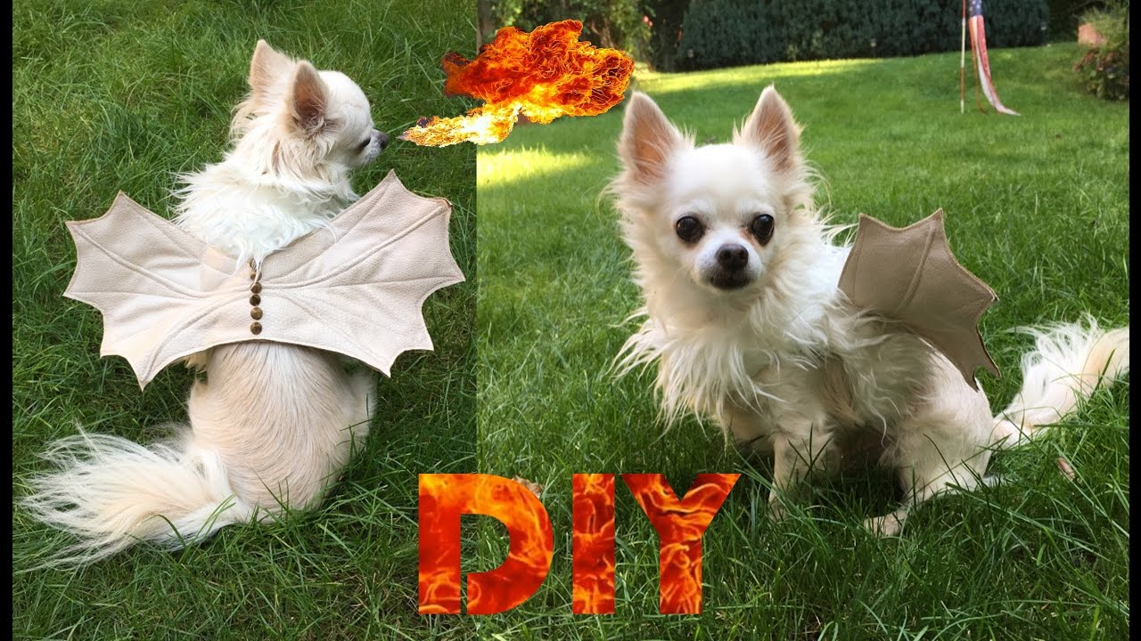 diy doggie dragon costume | halloween costume for dogs - youtube