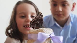 Обзор Домашней Фермы бабочек бабочкария от Флай-Флай