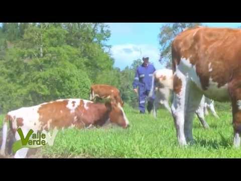 Valle Verde Dairy Factory