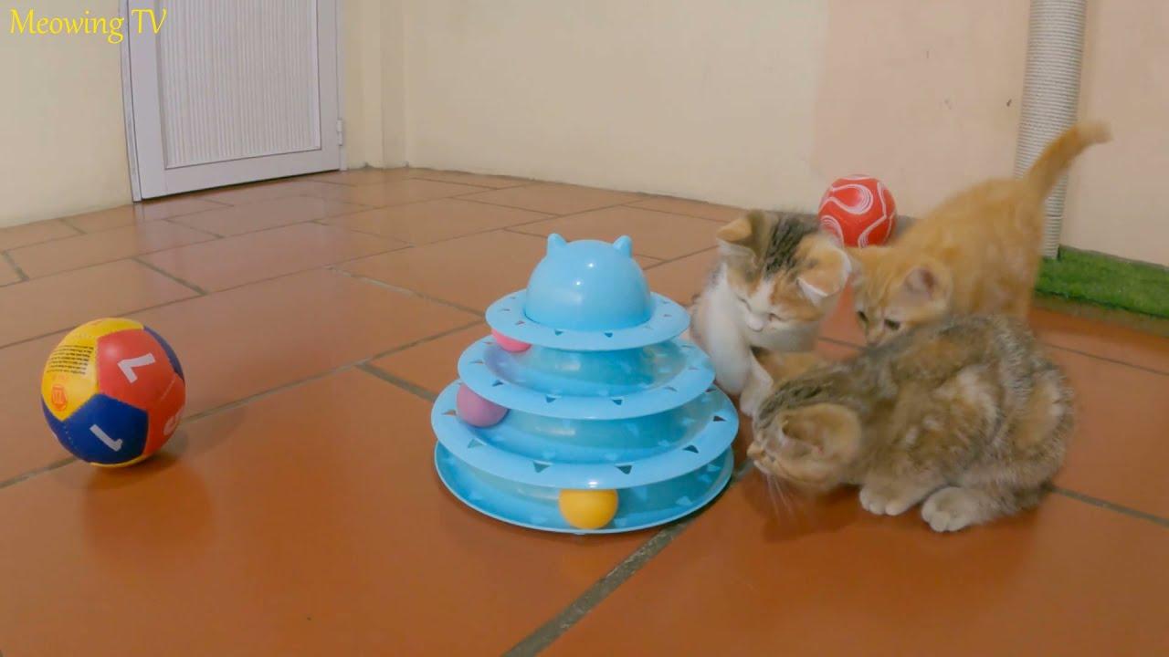 Kitten enjoys the ball tower toy.