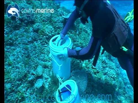 Hand Collecting Wrasse, Unicorns And Lemonpeels In The Coral Sea