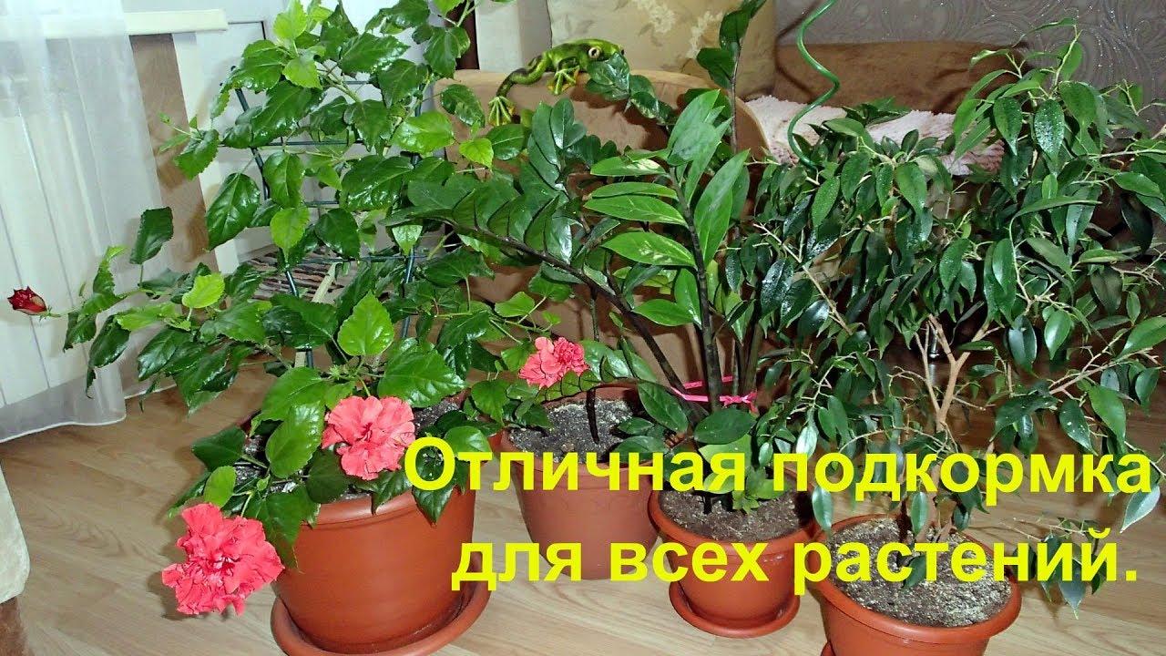 Подкормить садовые цветы