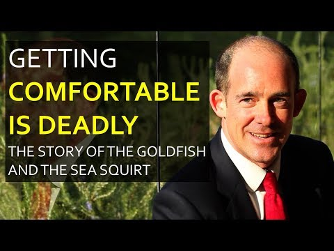 Getting Comfortable is Deadly - The Goldfish Story...
