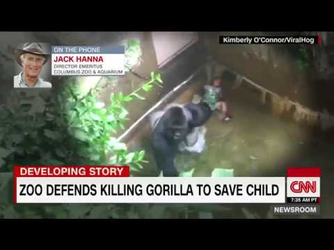 Harambe Goes For A Slip And Slide