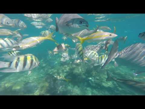 Sombrero Reef Snorkeling 5/3/17. Part 1.