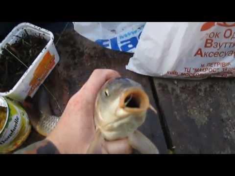 рыбалка для карпа держи озере
