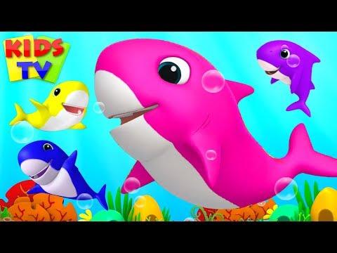 Baby Shark Song   Boom Buddies Cartoons   Kids Songs & Nursery Rhymes for Toddlers