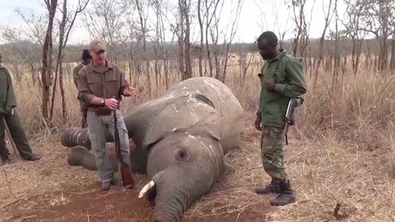 Elephant Poaching In Africa Facts - Best Elephant 2017