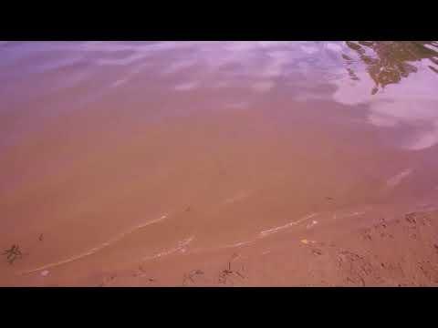 Участок 30 соток ИЖС в Красном Селе на береговой линии Безымянного озера