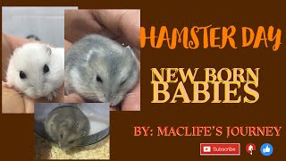 HAMSTER DAY | NEW BORN BABIES #MACLife'sJourney #vlog 06